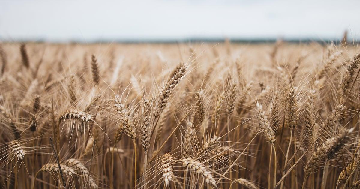 field harvest crop seeds